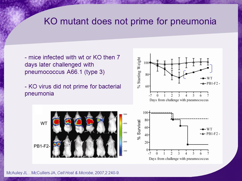 KO mutant does not prime for pneumonia - mice infected with wt or KO then 7 days later challenged with pneumococcus A66.1 (type 3) - KO virus did not prime for bacterial pneumonia McAuley JL…McCullers JA, Cell Host & Microbe, 2007;2:240-9.