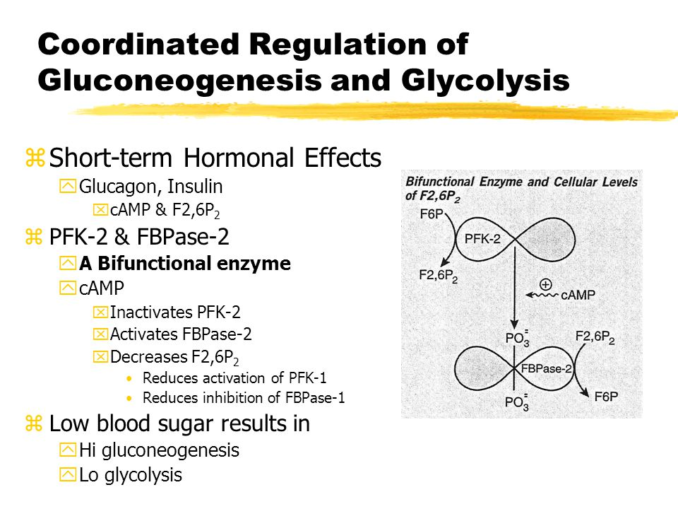 Coordinated Regulation of Gluconeogenesis and Glycolysis zAllosteric Effects zPyruvate kinase vs Pyruvate carboxylase yPK - Inhibited by ATP and alanine yPC - Activated by acetyl CoA yFasting results in gluconeogenesis zPFK-1 vs FBPase-1 yFBPase-1 inhibited by AMP & F2,6P 2 yPFK-1 activated by AMP and & F2,6P 2 yFeeding results in glycolysis