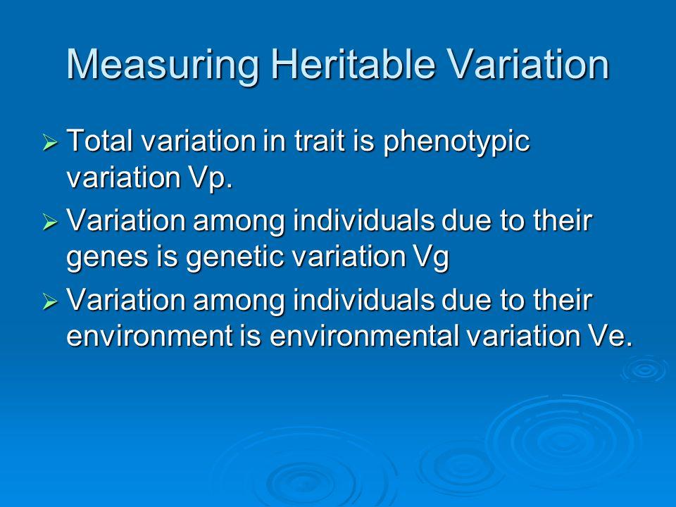 Measuring Heritable Variation  Total variation in trait is phenotypic variation Vp.  Variation among individuals due to their genes is genetic varia