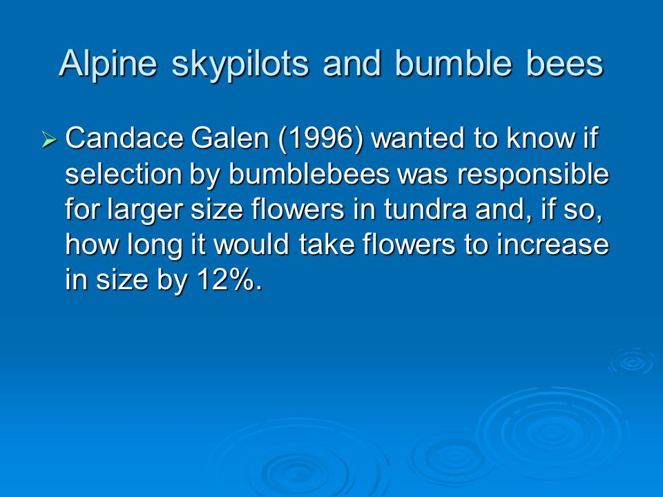 Alpine skypilots and bumble bees  Candace Galen (1996) wanted to know if selection by bumblebees was responsible for larger size flowers in tundra an