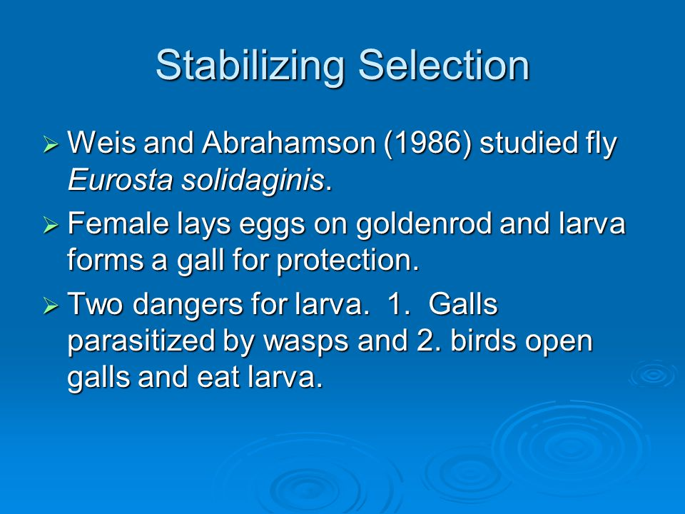 Stabilizing Selection  Weis and Abrahamson (1986) studied fly Eurosta solidaginis.  Female lays eggs on goldenrod and larva forms a gall for protect