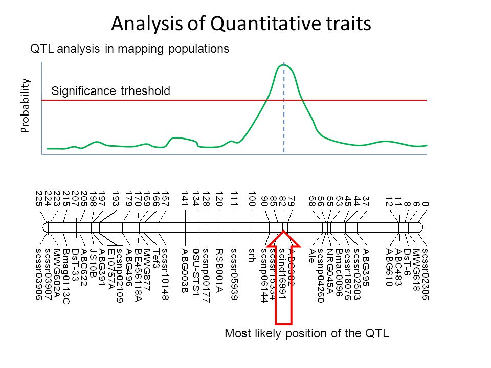 Analysis of Quantitative traits QTL analysis in mapping populations Probability Significance trheshold Most likely position of the QTL