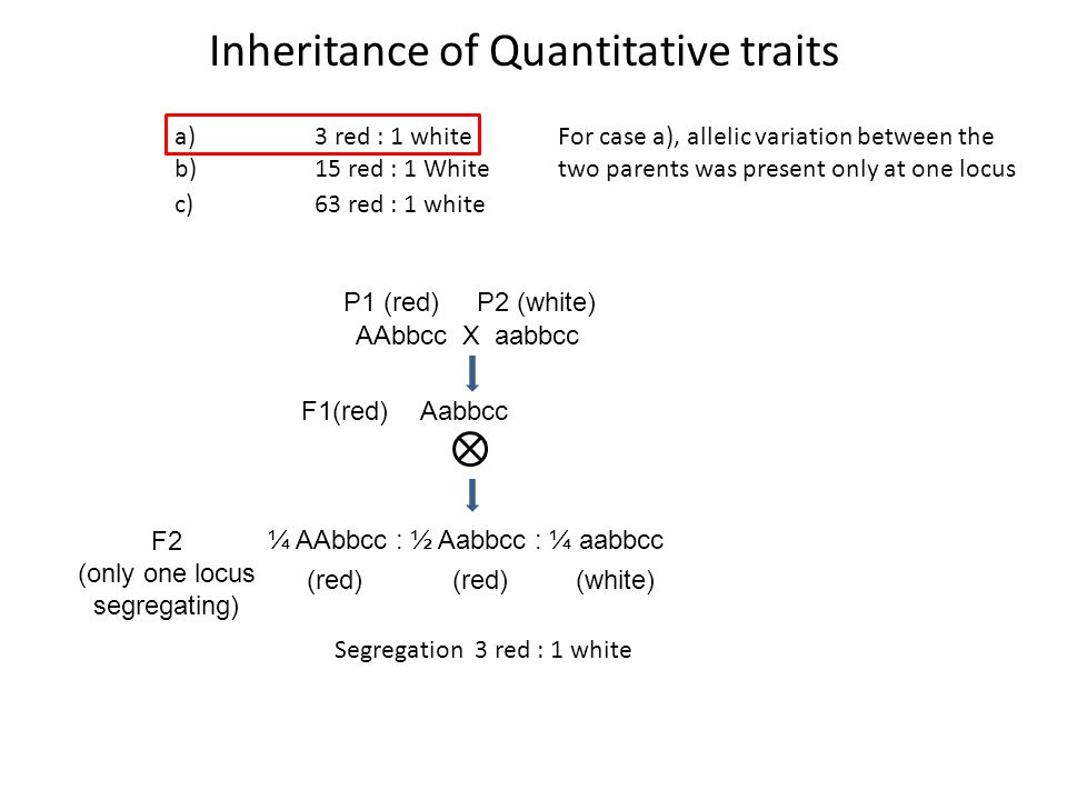 Inheritance of Quantitative traits a)3 red : 1 white b)15 red : 1 White c)63 red : 1 white AAbbcc X aabbcc P1 (red) P2 (white) AabbccF1(red) F2 (only