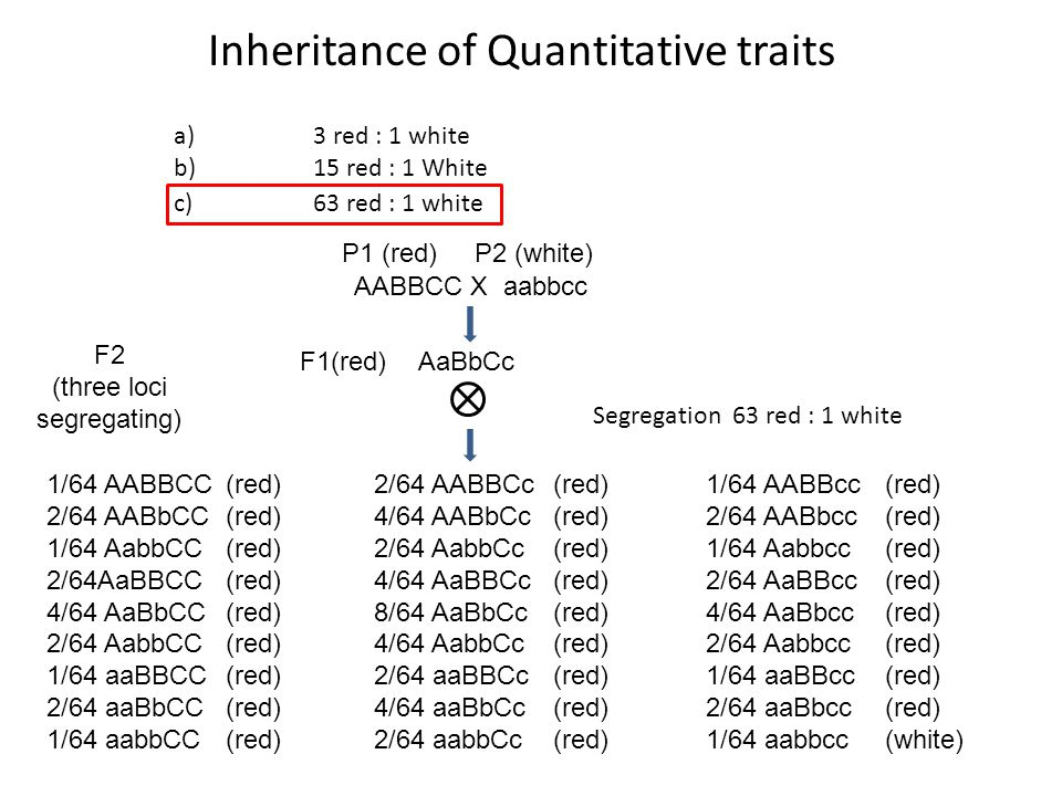 Inheritance of Quantitative traits a)3 red : 1 white b)15 red : 1 White c)63 red : 1 white AABBCC X aabbcc P1 (red) P2 (white) AaBbCcF1(red) F2 (three