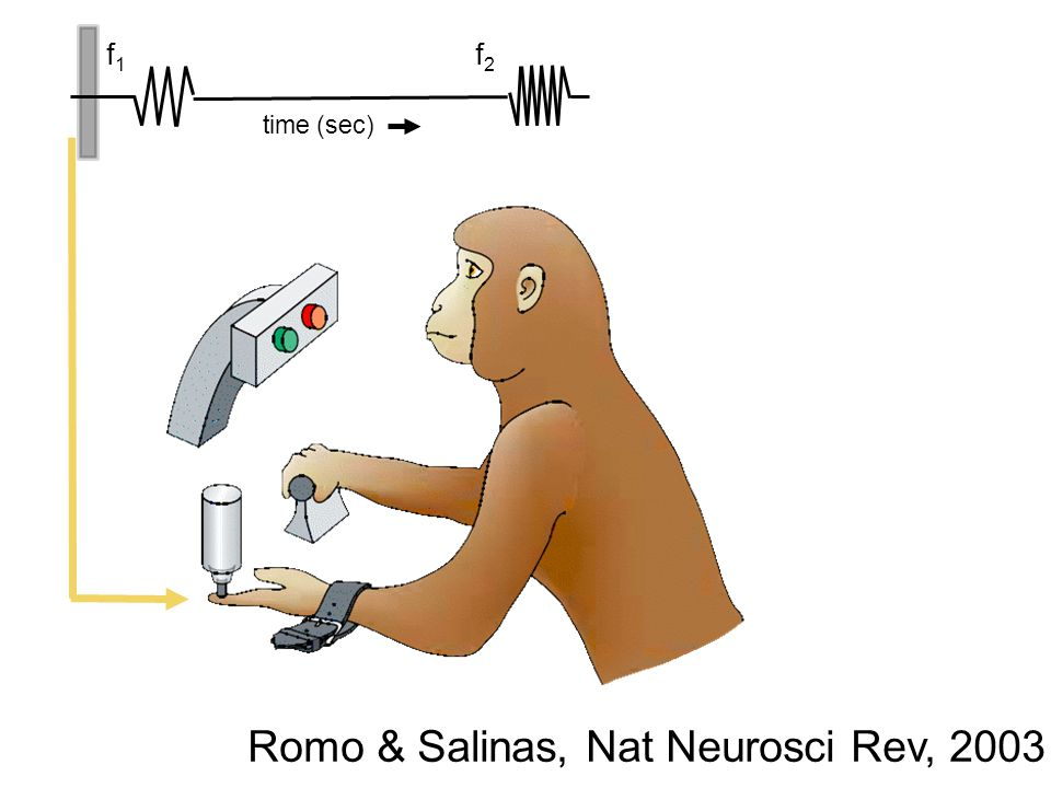 f 1 f 2 time (sec) Romo & Salinas, Nat Neurosci Rev, 2003