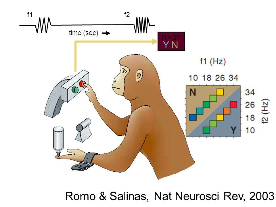 f1f2 f1>f2? YN time (sec) Romo & Salinas, Nat Neurosci Rev, 2003
