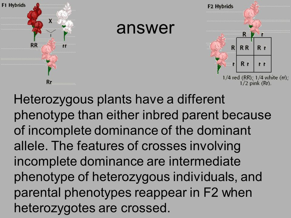 answer Heterozygous plants have a different phenotype than either inbred parent because of incomplete dominance of the dominant allele. The features o