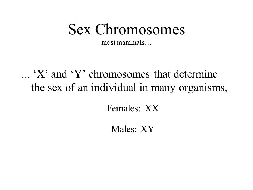 Sex Determination Systems Different mechanisms of sex selection exist: » XX / XO (O = null), ZW / ZZ (female ZW, Male ZZ), haplo / diplo (males are haploid), XX / XY (most mammals).