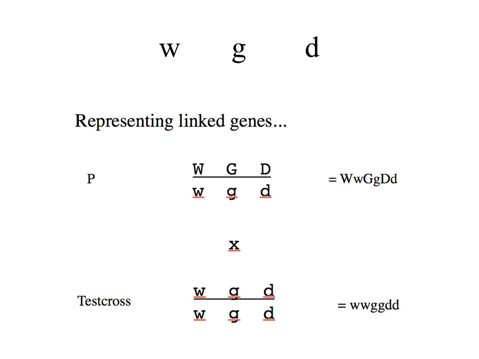 Three Point Mapping Requirements The genotype of the organism producing the gametes must be heterozygous at all three loci, You have to be able to deduce the genotype of the gamete by looking at the phenotype of the offspring, You must look at enough offspring so that all crossover classes are represented.