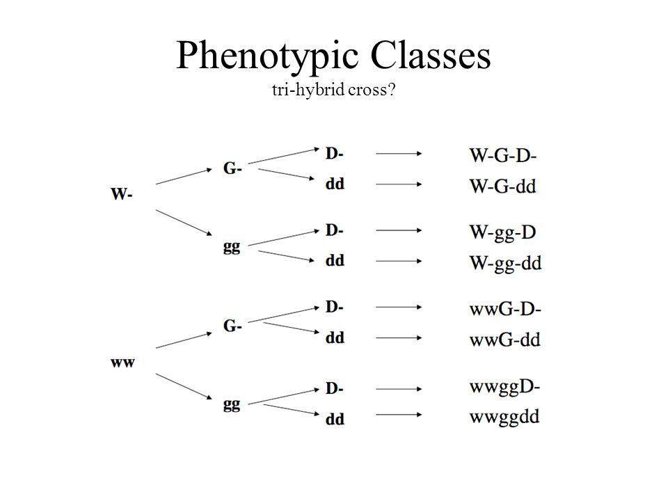 Representing linked genes... + + + w g d x w g d P Testcross = WwGgDd = wwggdd