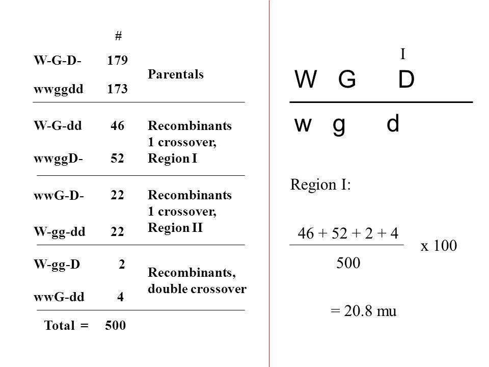 W-G-D- W-G-dd W-gg-D W-gg-dd wwG-D- wwG-dd wwggD- # 179 52 46 4 22 2 wwggdd173 Parentals Recombinants, double crossover Recombinants 1 crossover, Region I Recombinants 1 crossover, Region II