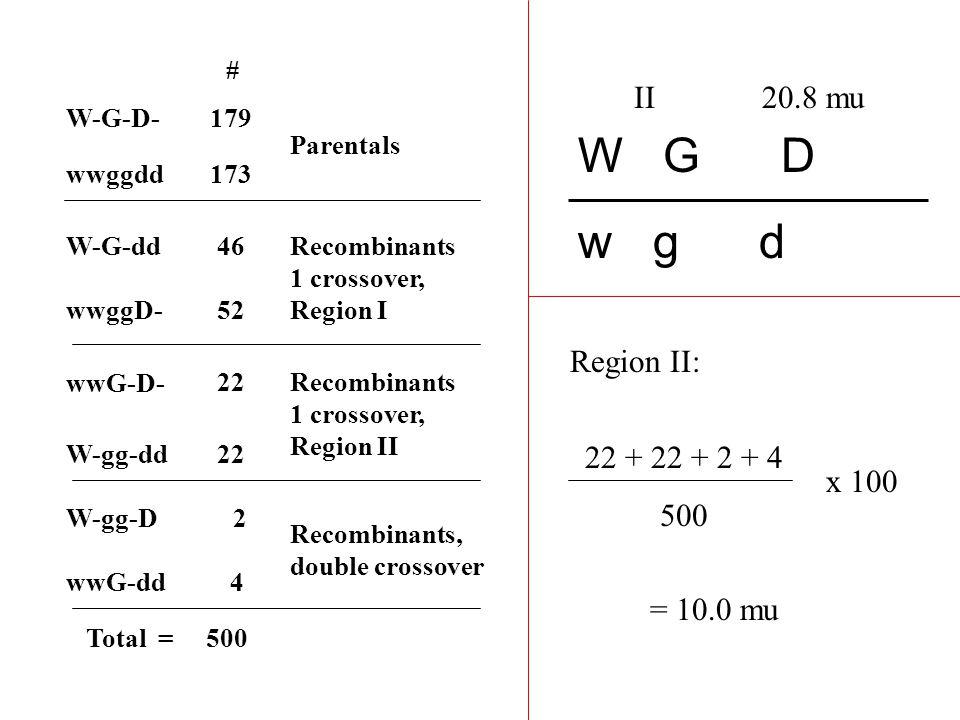 W-G-D- W-G-dd W-gg-D W-gg-dd wwG-D- wwG-dd wwggD- # 179 52 46 4 22 2 wwggdd173 Parentals Recombinants, double crossover Recombinants 1 crossover, Region I Recombinants 1 crossover, Region II W G D w g d I Total = 500 Region I: 46 + 52 + 2 + 4 500 x 100 = 20.8 mu
