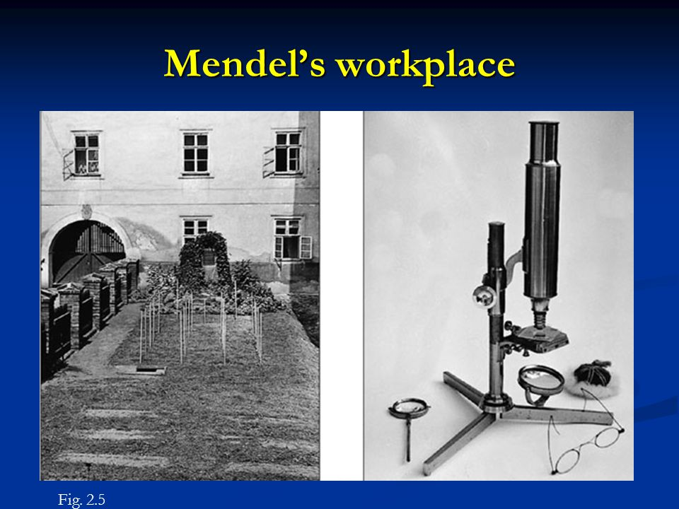 Mendel's workplace Fig. 2.5
