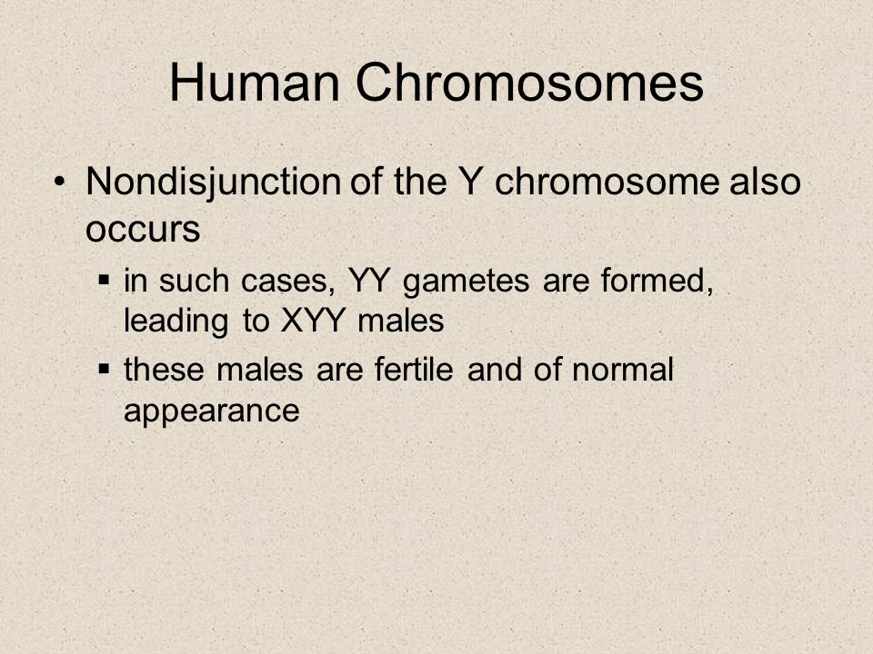 Human Chromosomes Nondisjunction of the Y chromosome also occurs  in such cases, YY gametes are formed, leading to XYY males  these males are fertil