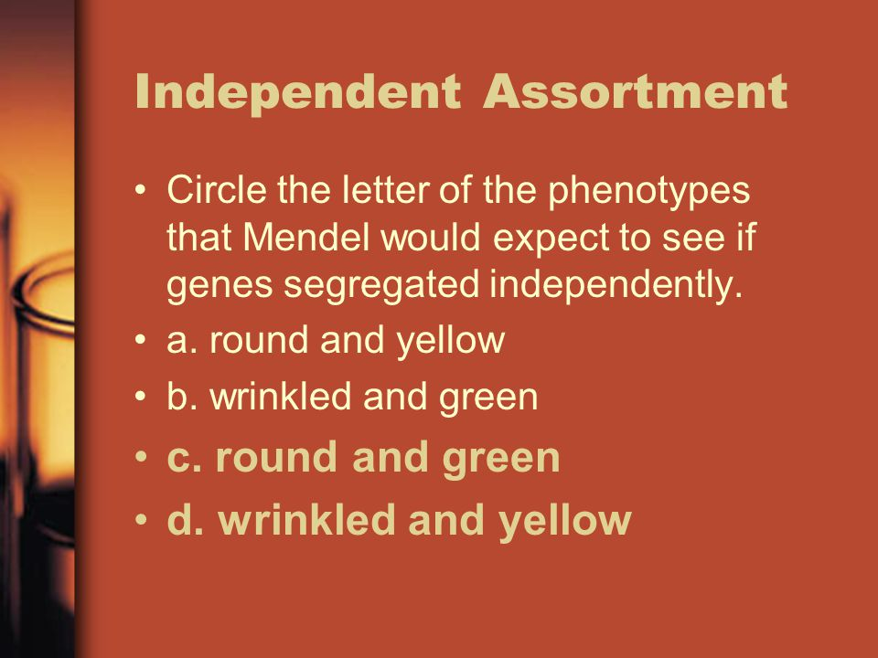 Independent Assortment Circle the letter of the phenotypes that Mendel would expect to see if genes segregated independently.