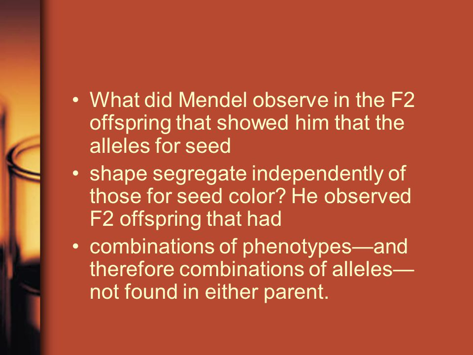 What did Mendel observe in the F2 offspring that showed him that the alleles for seed shape segregate independently of those for seed color.