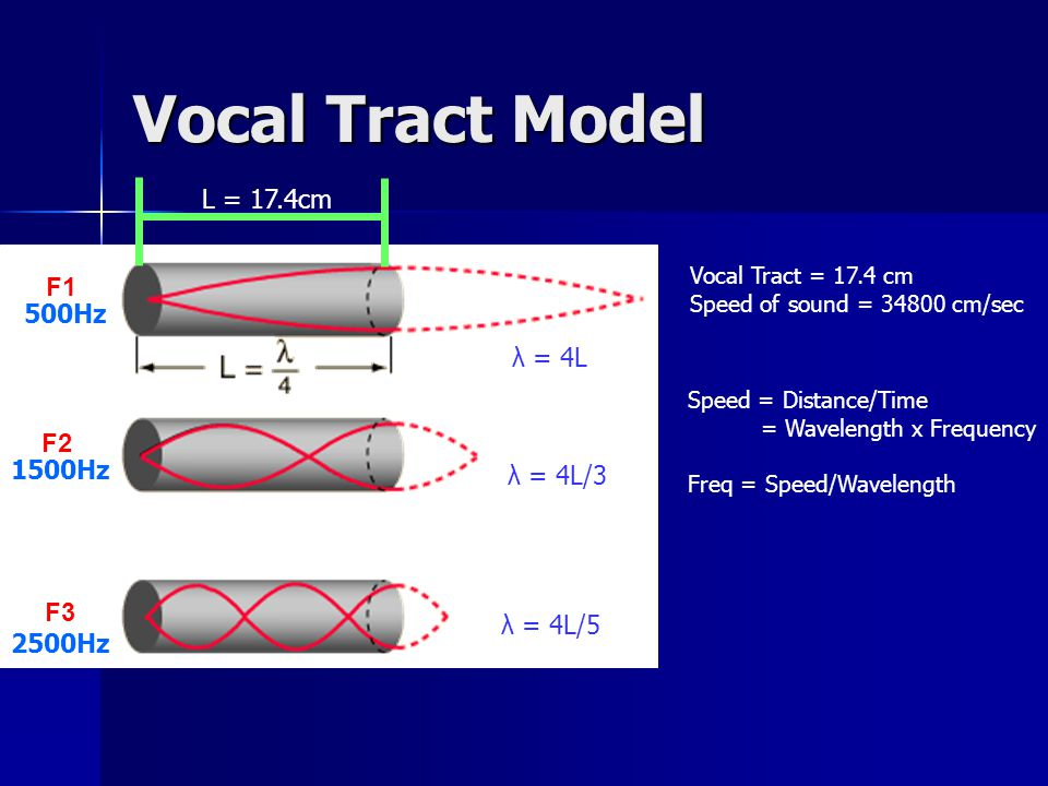 Vocal Tract Model F1 F2 F3 Vocal Tract = 17.4 cm Speed of sound = 34800 cm/sec Speed = Distance/Time = Wavelength x Frequency Freq = Speed/Wavelength L = 17.4cm 500Hz 1500Hz 2500Hz λ = 4L λ = 4L/3 λ = 4L/5