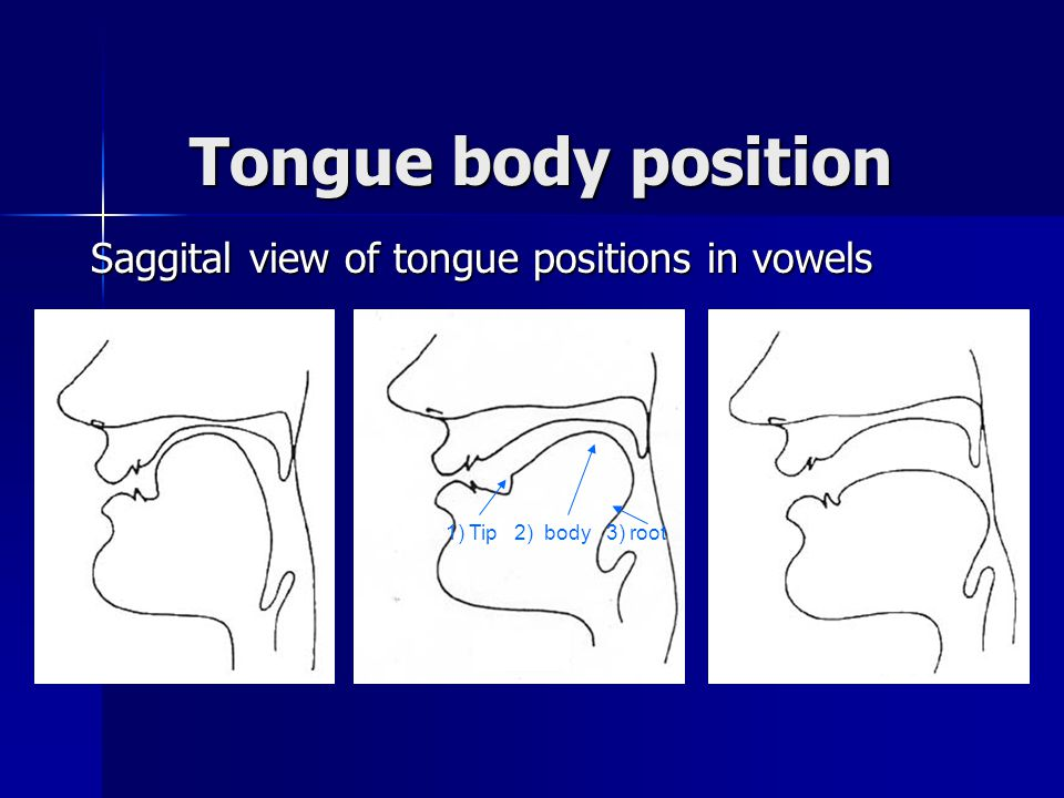 Tongue body position Saggital view of tongue positions in vowels 1) Tip 2) body 3) root