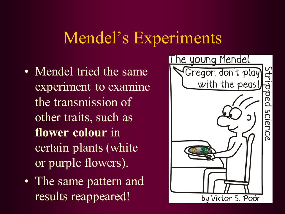 Mendel's Experiments Mendel tried the same experiment to examine the transmission of other traits, such as flower colour in certain plants (white or p