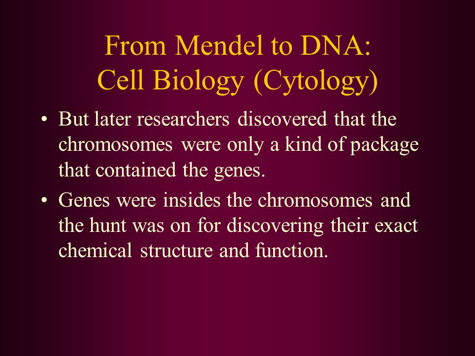 From Mendel to DNA: Cell Biology (Cytology) But later researchers discovered that the chromosomes were only a kind of package that contained the genes