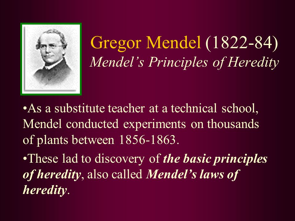 Analysis of Mendel's Experiments: Alleles - 2 alternative forms of a trait 2.