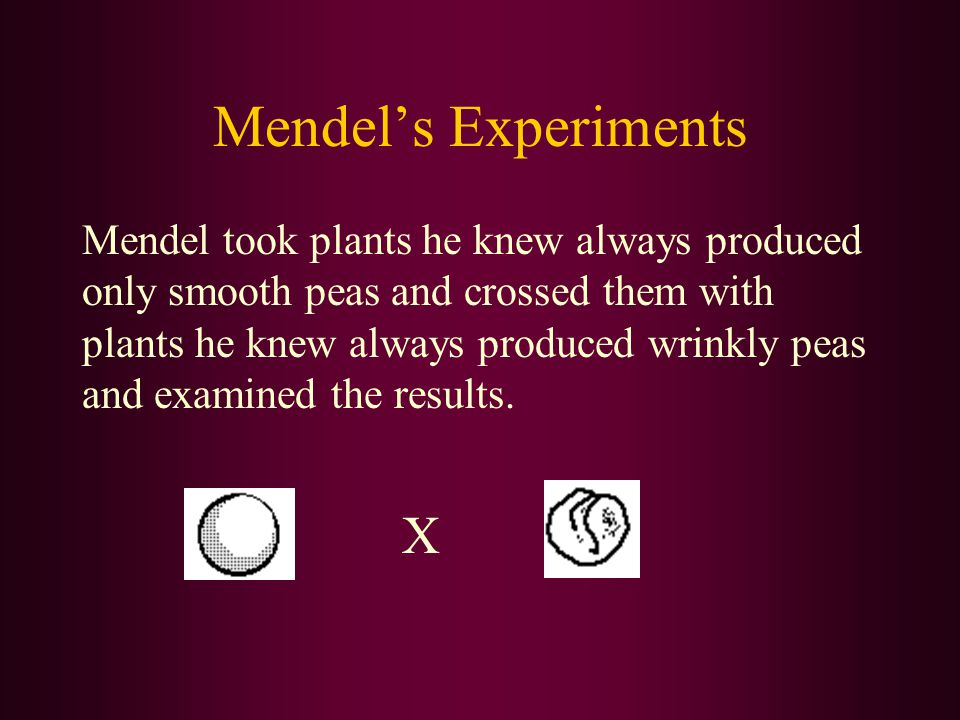 Analysis of Mendel's Experiments: When both alleles of a gene produce the same trait, the gene is said to be homozygous.