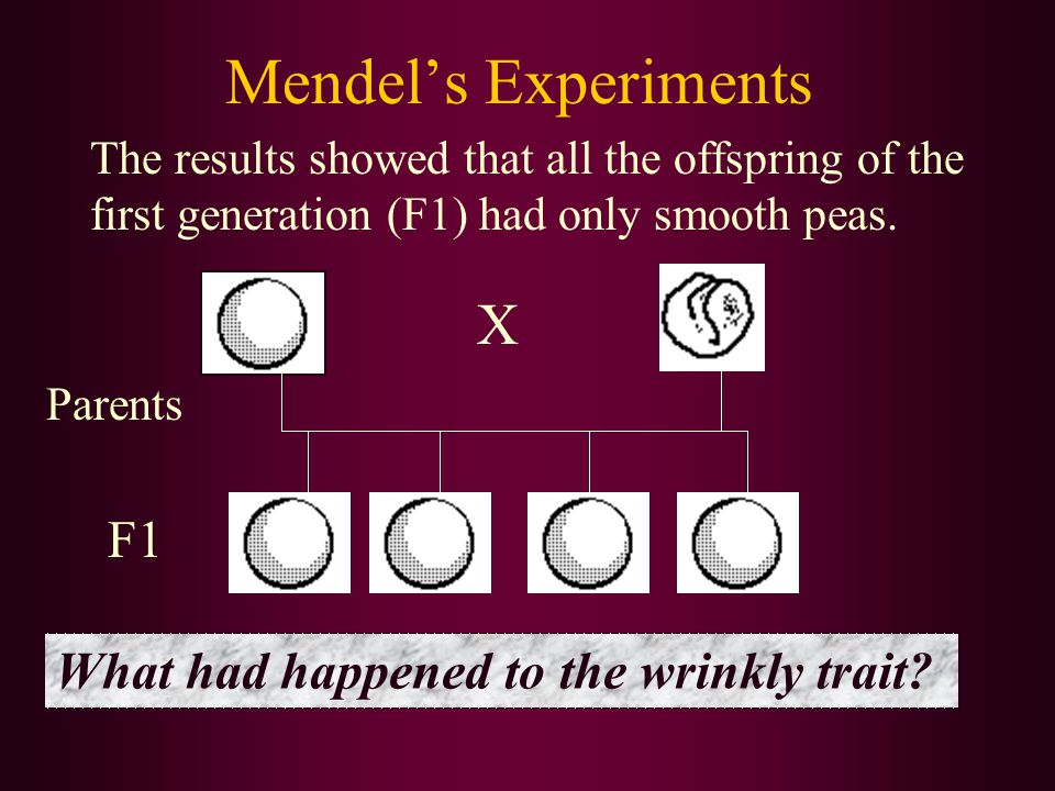 Mendel's Experiments The results showed that all the offspring of the first generation (F1) had only smooth peas.