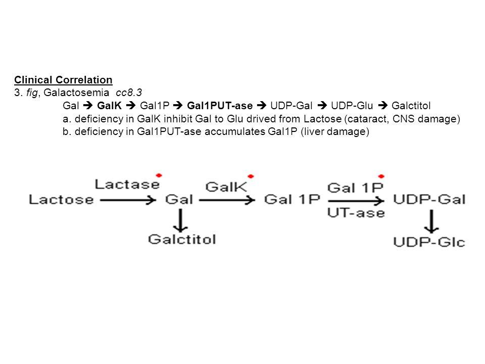Clinical Correlation 3. fig, Galactosemia cc8.3 Gal  GalK  Gal1P  Gal1PUT-ase  UDP-Gal  UDP-Glu  Galctitol a. deficiency in GalK inhibit Gal to