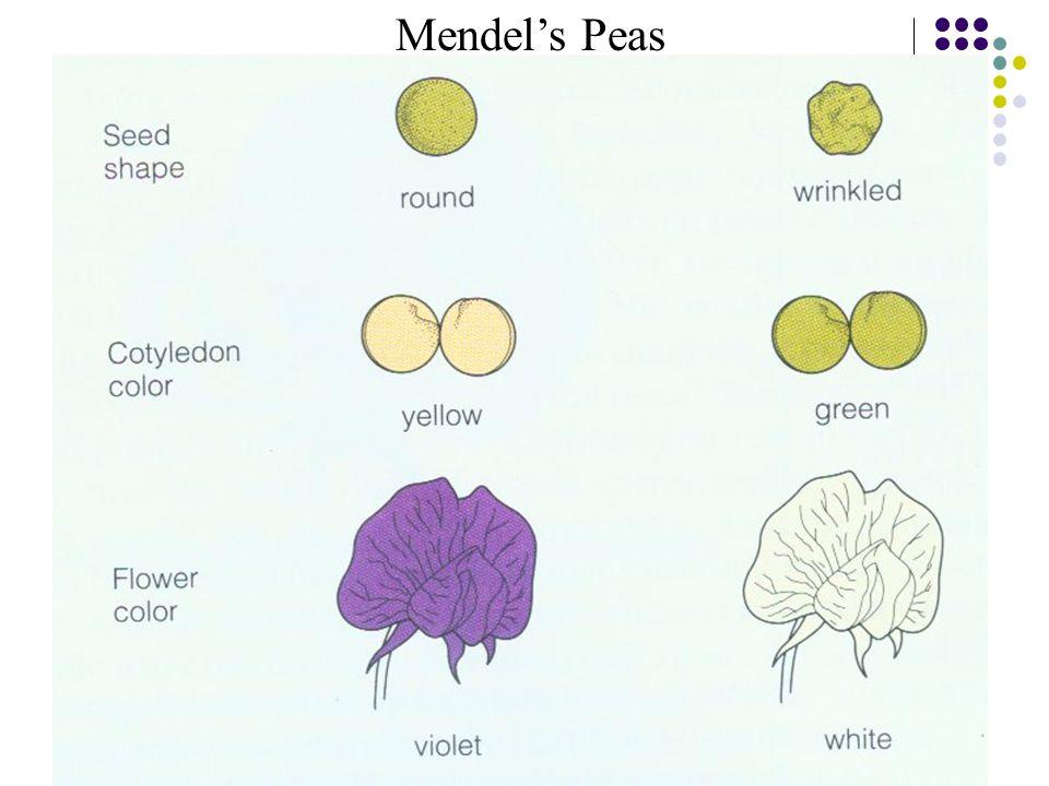 2015-4-17EECS 73010 Mendel's Peas