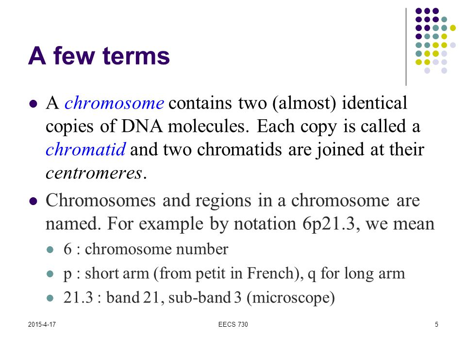2015-4-17EECS 7305 A few terms A chromosome contains two (almost) identical copies of DNA molecules. Each copy is called a chromatid and two chromatid