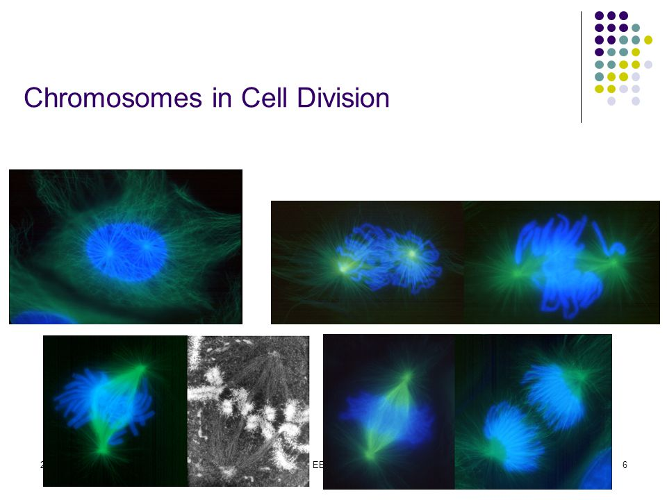 2015-4-17EECS 7306 Chromosomes in Cell Division