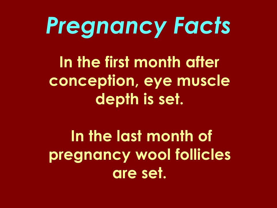 Pregnancy Facts In the first month after conception, eye muscle depth is set.