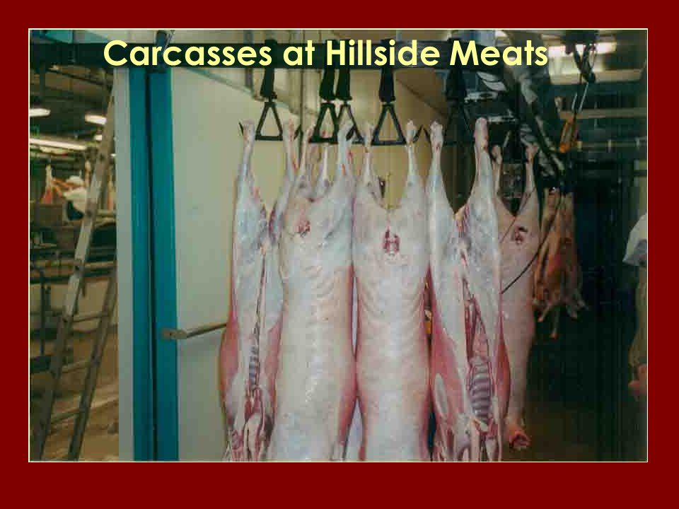 Carcasses at Hillside Meats