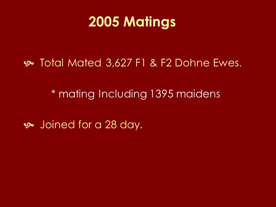 2005 Matings  Total Mated 3,627 F1 & F2 Dohne Ewes.
