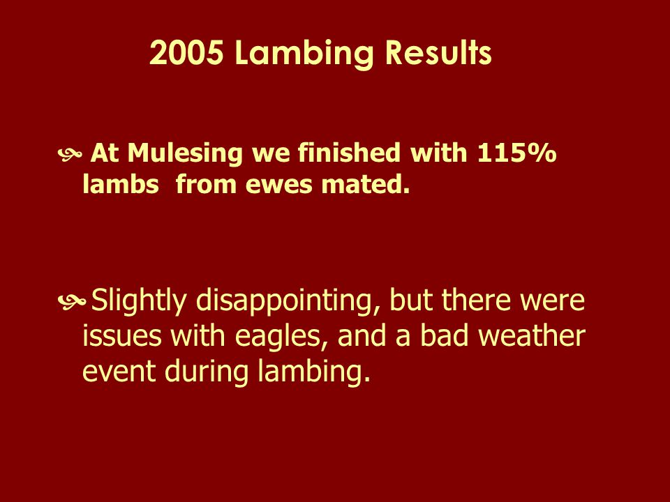 2005 Lambing Results  At Mulesing we finished with 115% lambs from ewes mated.