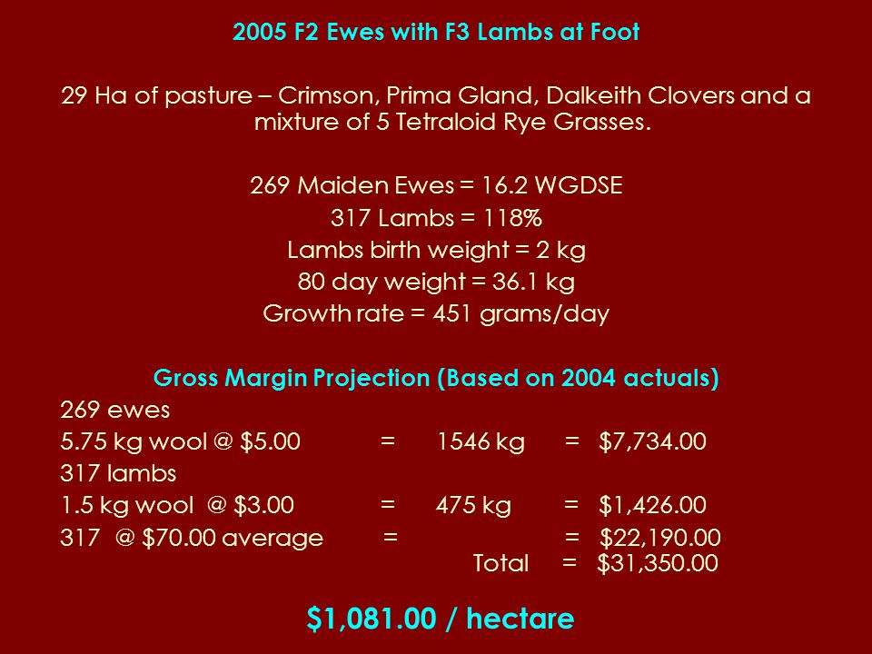 2005 F2 Ewes with F3 Lambs at Foot 29 Ha of pasture – Crimson, Prima Gland, Dalkeith Clovers and a mixture of 5 Tetraloid Rye Grasses.