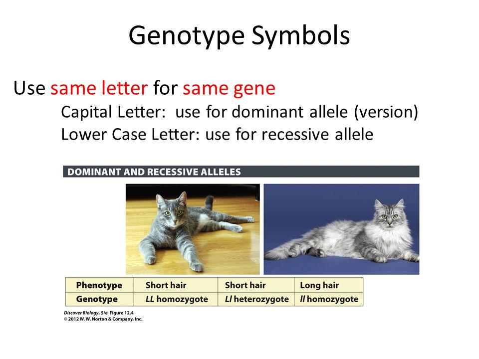 Genotype Symbols Use same letter for same gene Capital Letter: use for dominant allele (version) Lower Case Letter: use for recessive allele