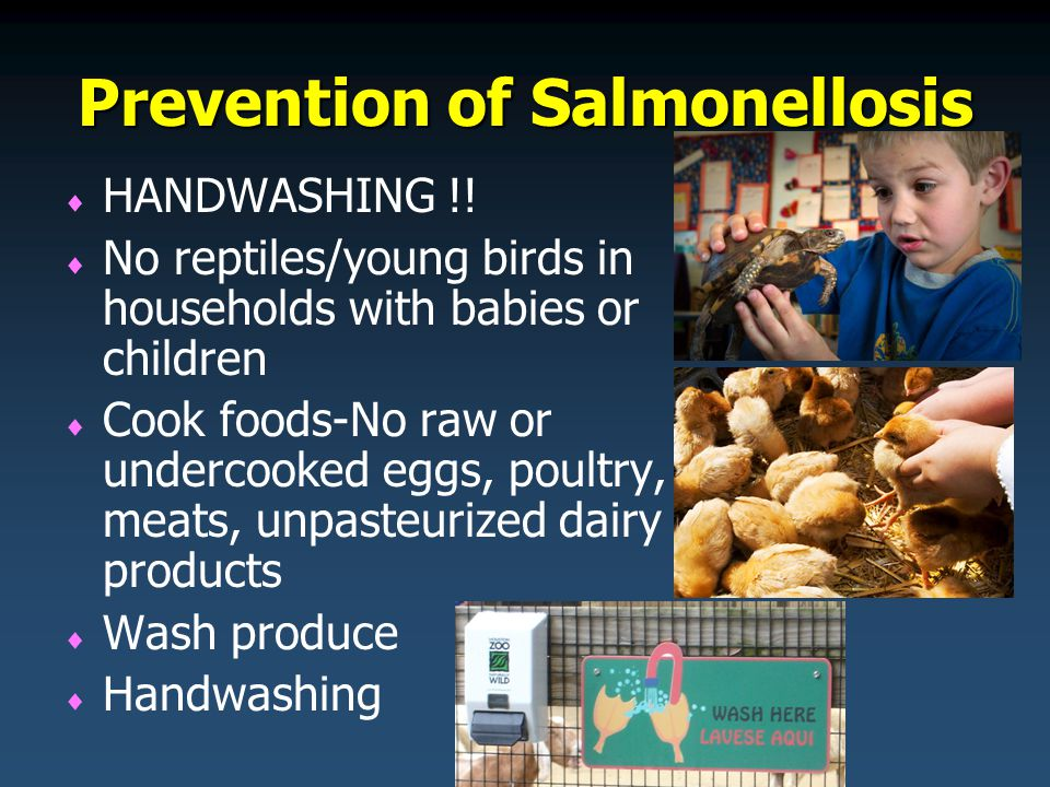 Prevention of Salmonellosis   HANDWASHING !.