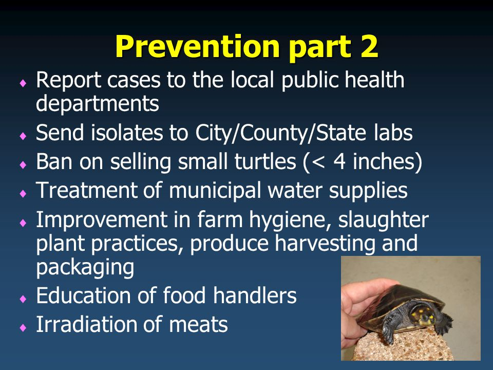 Prevention part 2   Report cases to the local public health departments   Send isolates to City/County/State labs   Ban on selling small turtles (< 4 inches)   Treatment of municipal water supplies   Improvement in farm hygiene, slaughter plant practices, produce harvesting and packaging   Education of food handlers   Irradiation of meats