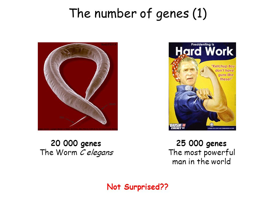 25 000 genes The most powerful man in the world Not Surprised .