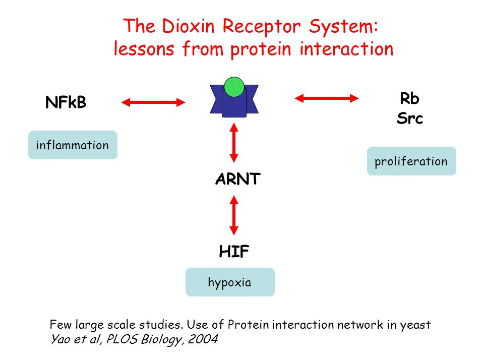 The Dioxin Receptor System: lessons from protein interaction ARNT NFkB Rb Src HIF inflammation hypoxia proliferation Few large scale studies.