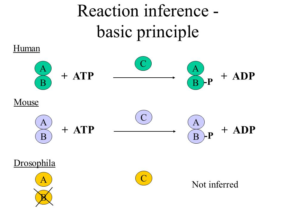 Reaction inference - basic principle A + ATP B A B + ADP -P C Human A + ATP B A B + ADP -P C Mouse A B C Drosophila Not inferred
