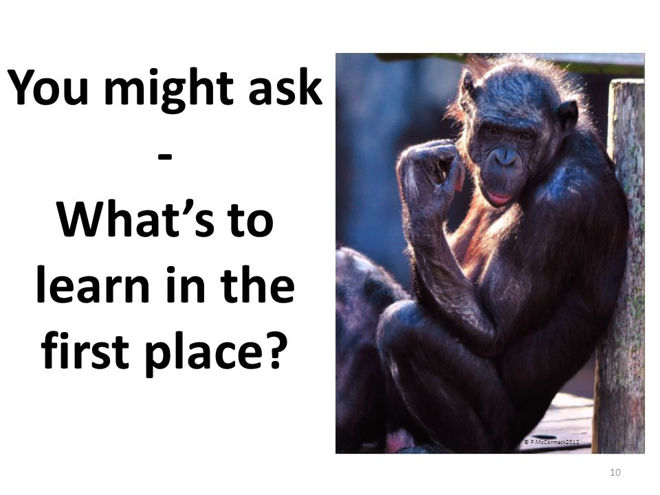 10 You might ask - What's to learn in the first place © P.McCormack2012