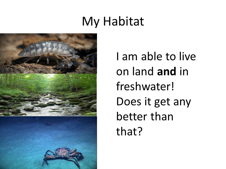 My Habitat I am able to live on land and in freshwater! Does it get any better than that?