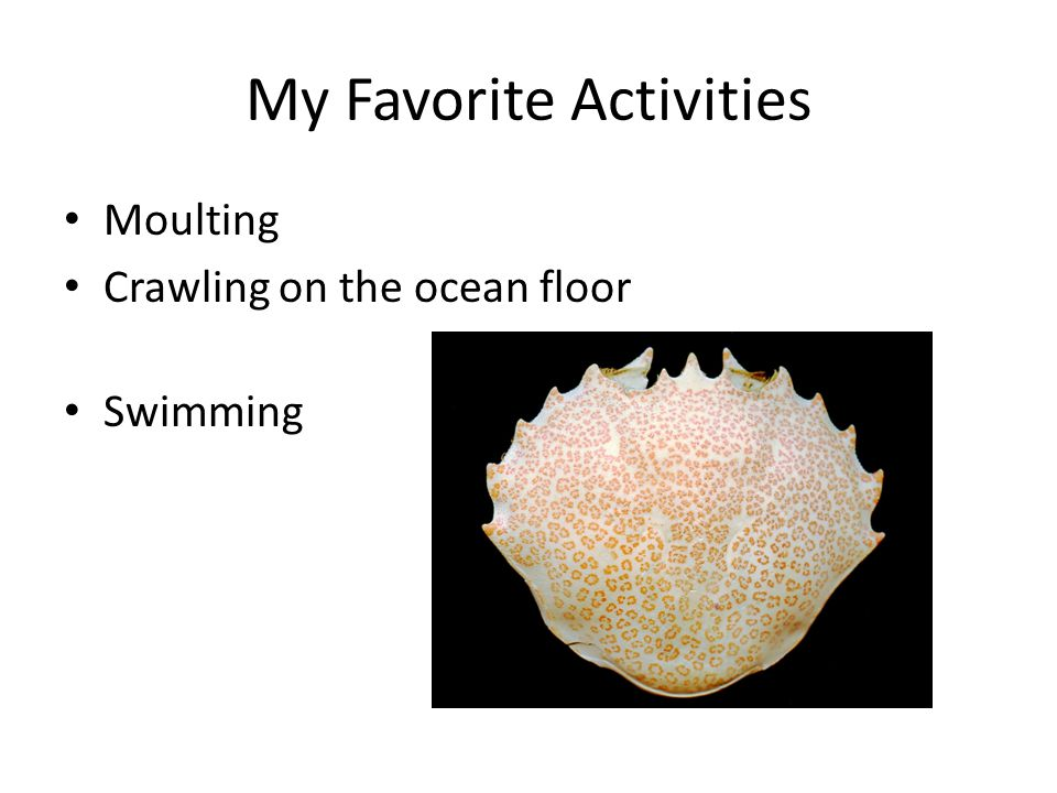 My Favorite Activities Moulting Crawling on the ocean floor Swimming