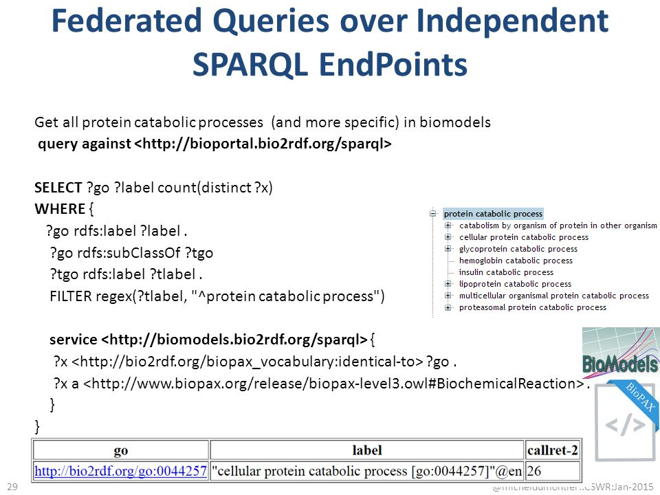 Federated Queries over Independent SPARQL EndPoints Get all protein catabolic processes (and more specific) in biomodels query against SELECT ?go ?lab