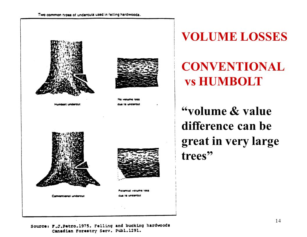14 VOLUME LOSSES CONVENTIONAL vs HUMBOLT volume & value difference can be great in very large trees