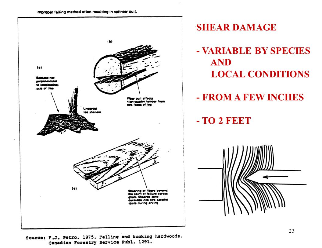23 SHEAR DAMAGE - VARIABLE BY SPECIES AND LOCAL CONDITIONS - FROM A FEW INCHES - TO 2 FEET