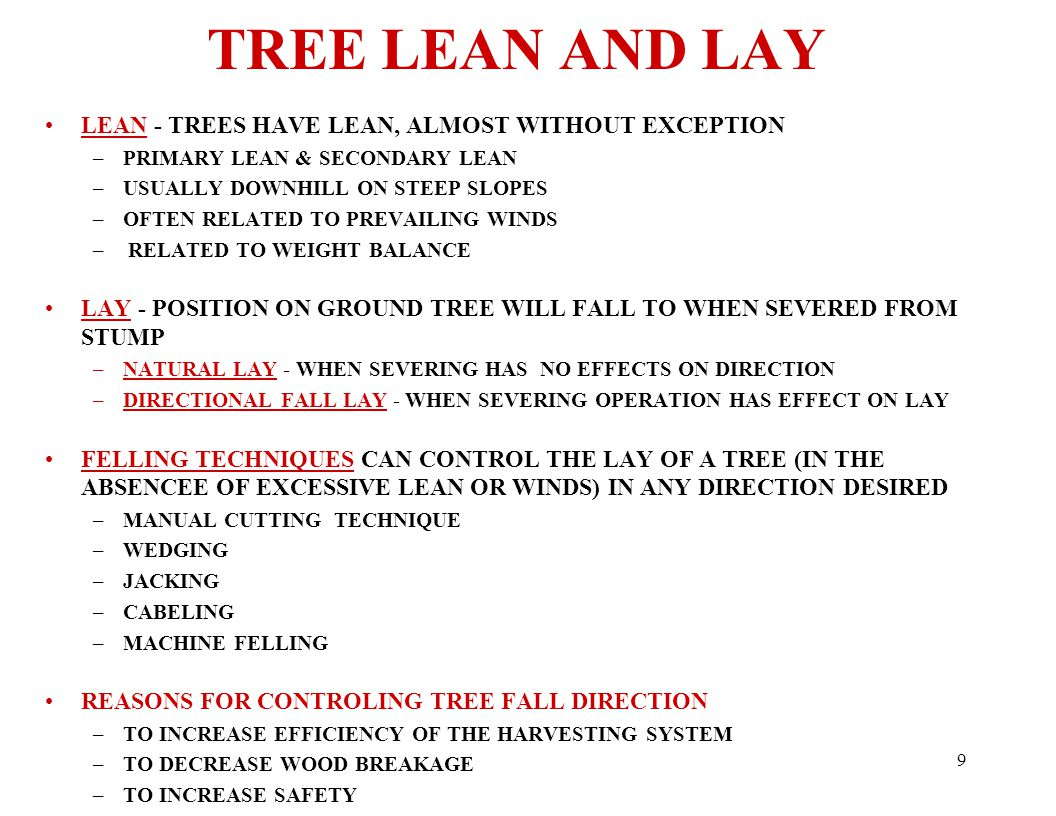 9 TREE LEAN AND LAY LEAN - TREES HAVE LEAN, ALMOST WITHOUT EXCEPTION –PRIMARY LEAN & SECONDARY LEAN –USUALLY DOWNHILL ON STEEP SLOPES –OFTEN RELATED TO PREVAILING WINDS – RELATED TO WEIGHT BALANCE LAY - POSITION ON GROUND TREE WILL FALL TO WHEN SEVERED FROM STUMP –NATURAL LAY - WHEN SEVERING HAS NO EFFECTS ON DIRECTION –DIRECTIONAL FALL LAY - WHEN SEVERING OPERATION HAS EFFECT ON LAY FELLING TECHNIQUES CAN CONTROL THE LAY OF A TREE (IN THE ABSENCEE OF EXCESSIVE LEAN OR WINDS) IN ANY DIRECTION DESIRED –MANUAL CUTTING TECHNIQUE –WEDGING –JACKING –CABELING –MACHINE FELLING REASONS FOR CONTROLING TREE FALL DIRECTION –TO INCREASE EFFICIENCY OF THE HARVESTING SYSTEM –TO DECREASE WOOD BREAKAGE –TO INCREASE SAFETY