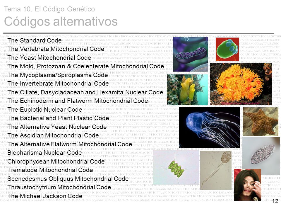 12 The Standard Code The Vertebrate Mitochondrial Code The Yeast Mitochondrial Code The Mold, Protozoan & Coelenterate Mitochondrial Code The Mycoplas